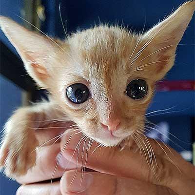 Kitten, kleine poesje. Mijn Simba Leeuwtje