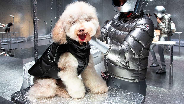 Modetrends 2021. Moncler Poldo Dog Couture