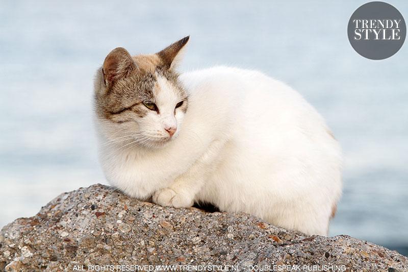 Streetstyle: katten en poezen
